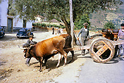 A series of images about port wine production in Portugal c 1960 - traditional ox  cart