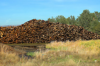 Trees cut down for lumber, Oroville, CA