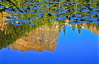 Reflections of 12,713 ft. Hallett Peak in Nymph Lake.  Rocky Mountain National Park, Colorado.