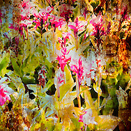 California, Botanical Gardens ... exquisite, beautiful, peaceful, colorful, elegant ... and full of magical images. <br /> <br /> Craig W. Cutler Photography.<br /> DesignLIFE by Craig W. Cutler Photography.