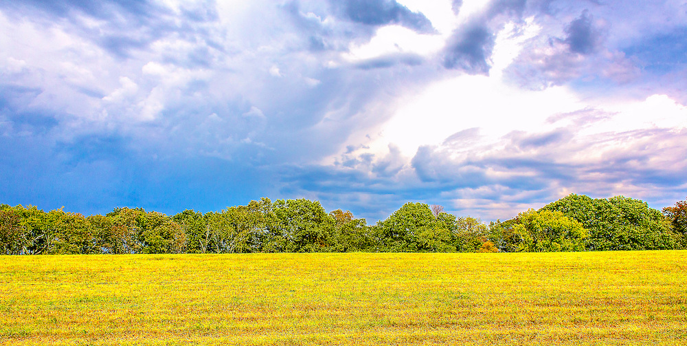 A row of textured green trees with a hint of fall yellow line a border between early afternoon skies of blue and the golden field of grasses