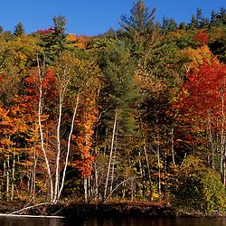 Saco River.   White Mountain N.F.  Fall foliage.  Bartlett, NH