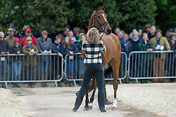 Funnell Pippa, (GBR), Second Supreme<br /> First Horse Inspection - Mitsubishi Motors Badminton Horse Trials <br /> Badminton 2015