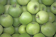Granny Smith cooking apples