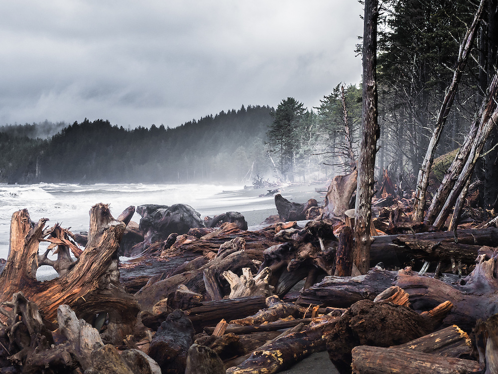 I came upon this immense pile of driftwood while walking along Rialto Beach after a winter storm. This is in Olympic National Park in Washington state.