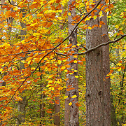 autumn leaves branches in wood scenery