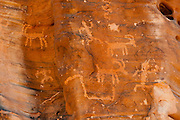 Prehistoric native Americans chipped images into the desert varnish on Petroglyph Canyon Trail, Valley of Fire State Park, Nevada, USA. Valley of Fire State Park, dedicated in 1935, is the oldest state park in Nevada. Starting more than 150 million years ago, great shifting sand dunes during the age of dinosaurs were compressed, uplifting, faulted, and eroded to form the park's fiery red sandstone formations. The park adjoins Lake Mead National Recreation Area at the Virgin River confluence, at an elevation of 2000 to 2600 feet (610-790 m), 50 miles (80 km) northeast of Las Vegas, USA. Park entry from Interstate 15 passes through the Moapa Indian Reservation.