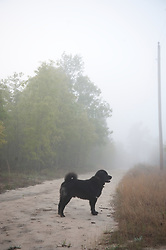 Black Dog Standing On A Dirt Road In Fog