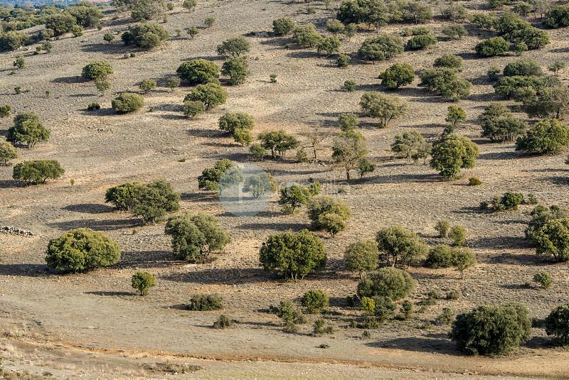 Paisaje de Encinas (Quercus ilex). Lezuza. Albacete ©ANTONIO REAL HURTADO / PILAR REVILLA