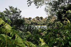 Laghi Alimini, Otranto LE 03 Luglio 2012.Vegetazione e bosco nei pressi dei laghi Alimini
