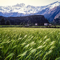 Nepal Dhaulagiri I towers over wheat fields  Larjung village at the bottom of  the Kali Gandaki Canyon, Nepal, the deepest gorge in the world.