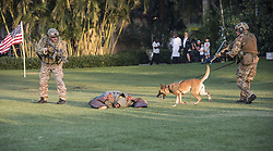 April 3, 2017 - Navy SEALS and their dog apprehend a mock-terrorist on the grounds of President Trump's Mar-a-Lago Club during a Navy SEAL evening of tribute Monday. .*.Navy Seal evening of tribute at Mar-a-Lago. The Seals and their dog apprehend the terrorist. (Credit Image: © Melanie Bell/Palm Beach Daily News via ZUMA Press)
