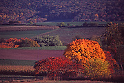 Fall foliage and farm, Perry Co., PA