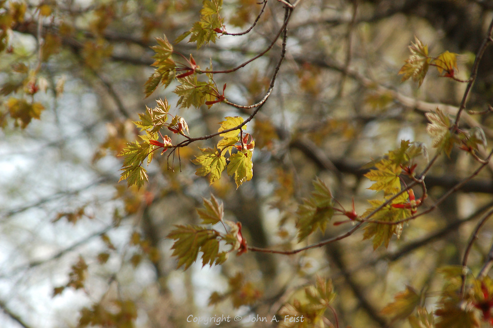 These new leaves trying to catch the mid day sun along the D and R Canal in Hillsborough, NJ