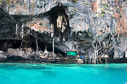 Located about 90 minutes by boat from Krabi Town, Phi Phi Ley, the smaller of the Phi Phi Islands contains a large cave, Tham Phraya Nak or The Viking Cave. The cave is home to vast numbers of swifts. Their nests, an essential ingredient in the Chinese gourmet dish Birds Nest soup, are collected by locals from a series of rickety bamboo ladders. It was once possible to enter this cave but now, due to the precious nature of the birds nests, this is impossible. These special nests command prices which makes them more valuable than gold.