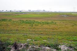 Orond Beach Area Marsh