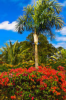 Flowering plants, Airport, Isle of Pines (Ile des Pins), New Caledonia