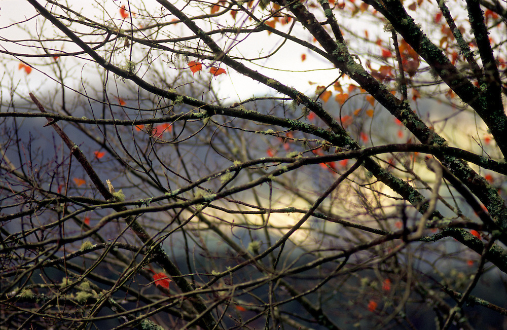 Leaves changing color in Alishan National Park, central Taiwan.