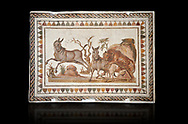 Picture of a Roman mosaics design depicting a lion attacking two onagers or Asiatic wild ass, from the ancient Roman city of Thysdrus. 3rd century AD. El Djem Archaeological Museum, El Djem, Tunisia. Against a black background .<br /> <br /> If you prefer to buy from our ALAMY PHOTO LIBRARY Collection visit : https://www.alamy.com/portfolio/paul-williams-funkystock/roman-mosaic.html . Type - El Djem - into the LOWER SEARCH WITHIN GALLERY box. Refine search by adding background colour, place, museum etc<br /> <br /> Visit our ROMAN MOSAIC PHOTO COLLECTIONS for more photos to download as wall art prints https://funkystock.photoshelter.com/gallery-collection/Roman-Mosaics-Art-Pictures-Images/C0000LcfNel7FpLI