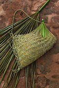 Single Palm leaf used to make basket<br /> Macushi people<br /> Amerindian village<br /> Savannah, Rupununi<br /> GUYANA<br /> South America
