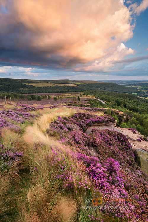 Purple heather on Millstone Edge, lit by the glow from the overhead cloud at sunset. Looking along the edge towards Surprise View. A classic summer scene in Derbyshire's Peak District National Park. August, 2014