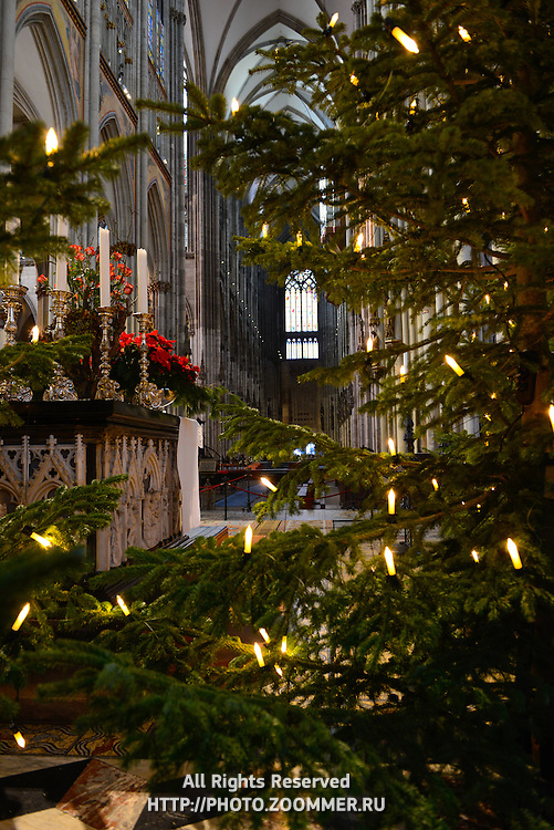 Christmas Tree Inside Cologne Cathedral in Germany