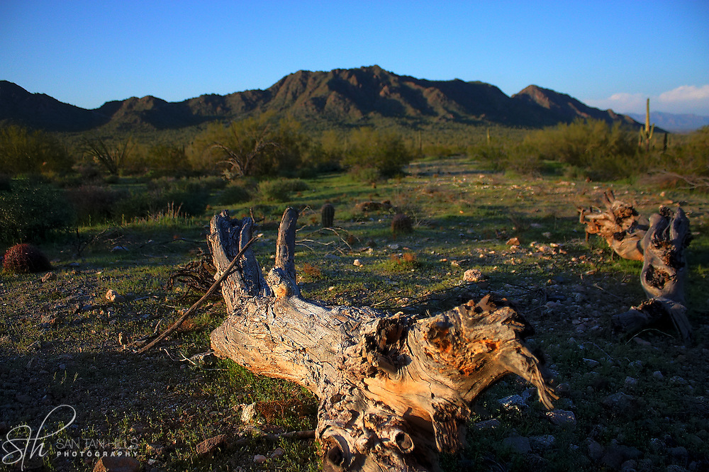 Dead tree with mountain in background