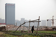 A woman tends to her vegetables on her land on the outskirts of Hangzhou, China on 27 January 2010. The land is slated for a new housing development. Land disputes between local government officials and farmers have contributed a large portion of rural unrest in China.