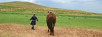 Mongolie, province de Ovorkhangai, parc de Batkhan, rassemblement des troupeaux // Mongolia, Ovorkhangai province, Batkhan national parc, Rallying of drove.