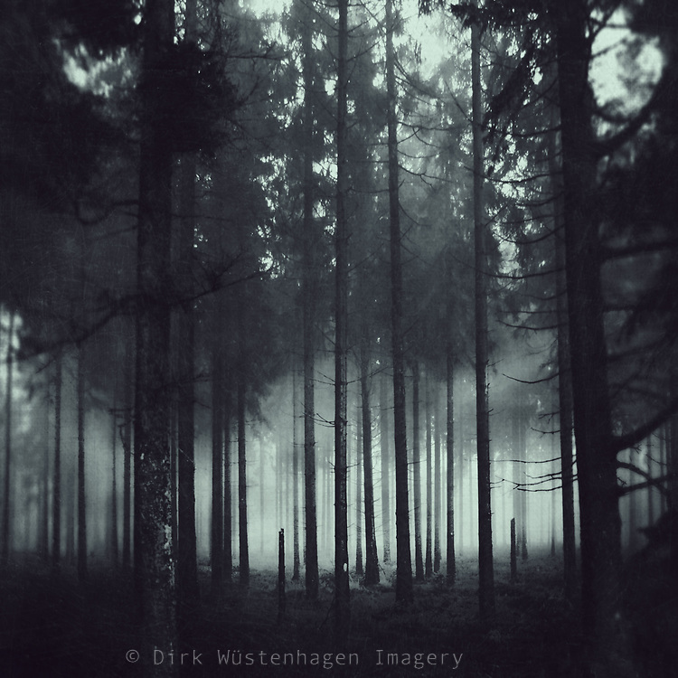 Forest shrouded in fog on a November fall day<br /> Society6 Prints & more: http://bit.ly/2ihjsY6<br /> Redbubble Prints: http://rdbl.co/2zSspP2