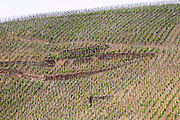 vineyard cote rotie rhone france