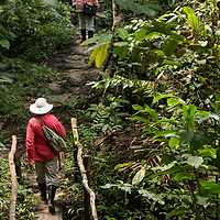 A Lindblad Expeditions guest walks on a trail near Casual off of the Marañon River. Pacaya Samiria National Reserve, Upper Amazon, Peru.