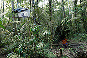 Ecuador, May 15 2010: A Cofan man (in orange) waits with his daughter (in the mosquito net on the platform) to record the actions from the Harpy Eagle nest. Images from Cofan Lodge...Copyright 2010 Peter Horrell