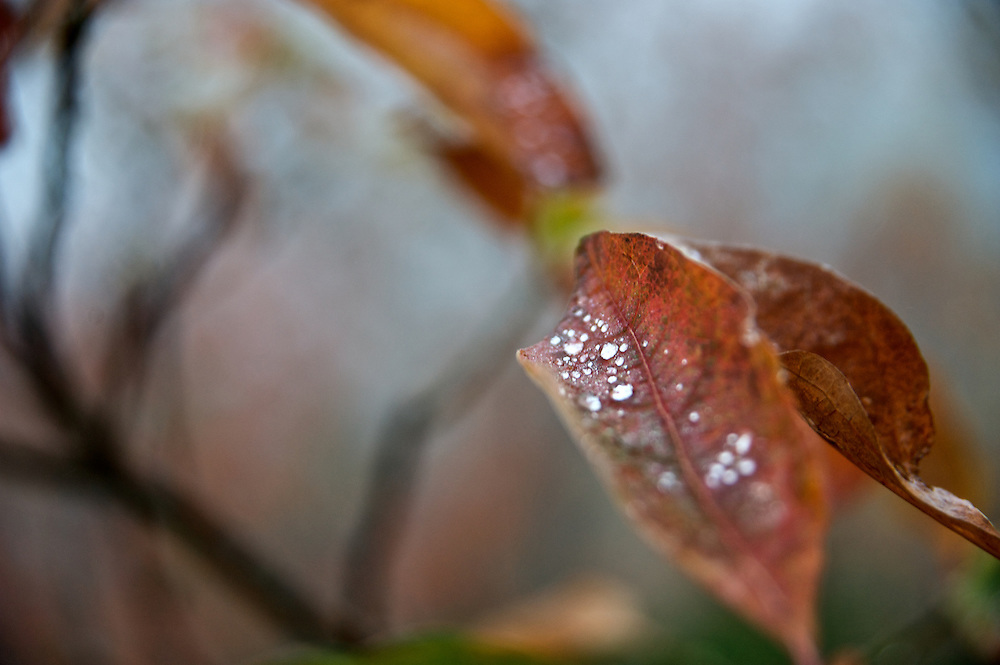 Dew drops rest on a leaf along the Blue Ridge Parkway, North Carolina