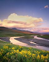 Lamar River, Yellowstone National Park Wyoming