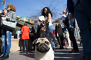 Pug dog and owner at the food market. The South Bank is a significant arts and entertainment district, and home to an endless list of activities for Londoners, visitors and tourists alike.