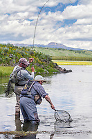 A fly fisherman brings in a hooked rainbow trout to a waiting net man on the Henry's Fork River in Idaho.
