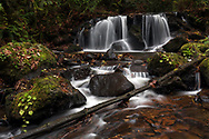 A small waterfall along Poignant Creek on the slopes of Sumas Mountain in Abbotsford, British Columbia, Canada