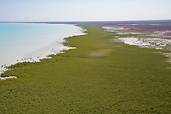 A brown line in the mangroves markes the trail of destruction where oil from a dead whale leached into Roebuck Bay.