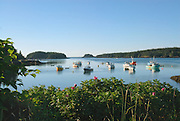 Early morning view of harbor in Cutler, Maine