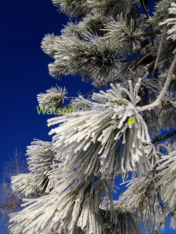 Frost Scapes