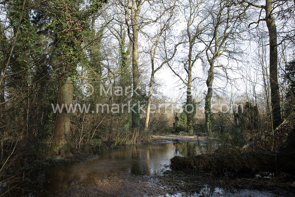 Denham, UK. 13th February, 2021. Flooded wet woodland in Denham Country Park. Two areas of Denham Country Park have been cleared of trees by contractors working on behalf of HS2 Ltd to relocate a pylon in connection with the HS2 high-speed rail link.