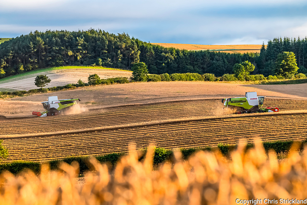 Morebattle, Kelso, Scottish Borders, Scotland, UK. 7th August 2020. Farmers harvest corn at Cessford, which is where St. Cuthbert's Way cuts through the Scottish Borders just north of the Cheviot Hills.