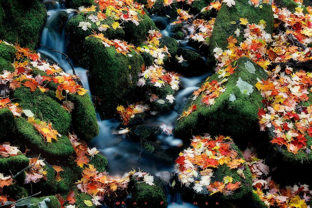 Intimate Flow<br /> Seasonal Brook, Tongue Mountain Range, Lake George, NY