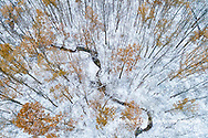 63877-00804 Trees with a dusting of snow aerial view Marion Co. IL