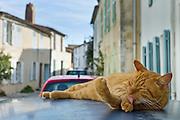 Ginger cat resting on hot tin roof at St Martin de Re, Ile de Re, France