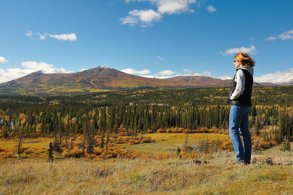 Admiring the fall colours near Haines Junction, Yukon
