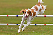 New Zealand Dog Agility Photos