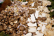 Organic and wild mushrooms for sale. All sorts of varieties are on available in this varied selection.