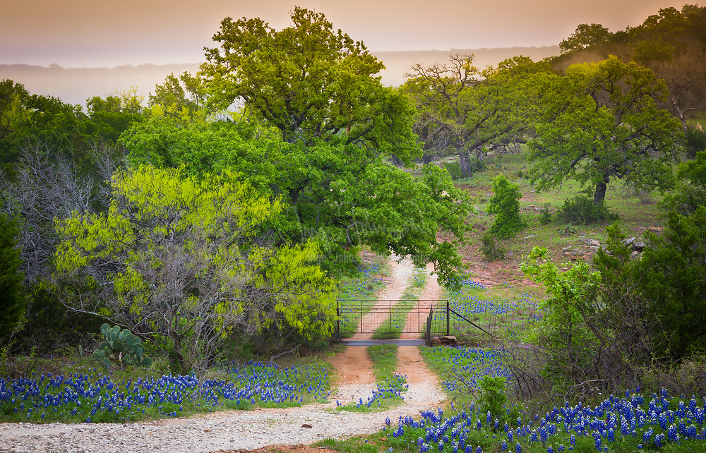 The Texas Hill Country is a twenty-five county region of Central Texas and South Texas featuring karst topography and tall rugged hills consisting of thin layers of soil atop limestone or granite. It also includes the Llano Uplift and the second largest granite dome in the United States, Enchanted Rock. The Hill Country reaches into portions of the two major metropolitan areas, especially in San Antonio's northern suburbs and the western half of Travis County, ending southwest of Downtown Austin. The region is the eastern portion of the Edwards Plateau and is bound by the Balcones Fault on the east and the Llano Uplift to the west and north. The terrain is punctuated by a large number of limestone or granite rocks and boulders and a thin layer of topsoil, which makes the region very dry and prone to flash flooding. The Texas Hill Country is also home to several native types of vegetation, such as various yucca, prickly pear cactus, cedar scrub, and the dry Southwestern tree known as the Texas live oak.